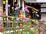 大覚寺の嵯峨菊