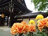 西本願寺の菊